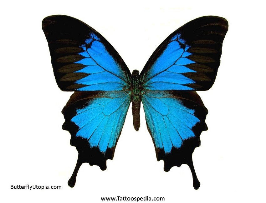 Ulysses Butterfly Tattoo Designs 3