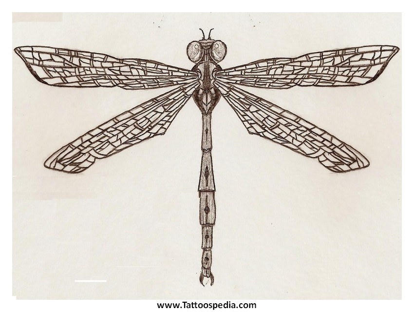 Native American Dragonfly Tattoos 6